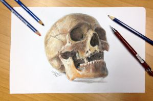 Skull color pencil drawing 2. by AtomiccircuS