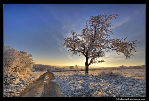 Lonely Tree by Shahenshah