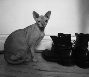 Hairless cat by imablueperson