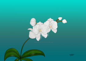 White Orchid by DarkRubyMoon