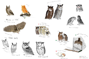 Owl Sketches 3 by Vanzkie