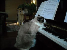 cat playing piano by paraskave