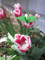 Crane with Tulips by cjtremlett