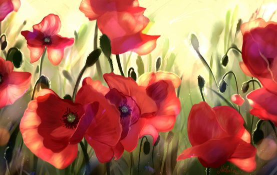 Poppies by Mellodee