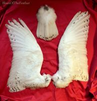 Snowy Owl wings and tail by BluesOfTheFeather
