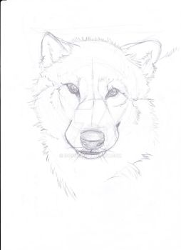 Wolf by Isofur