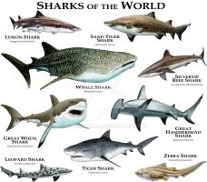 Sharks of the World by rogerdhall