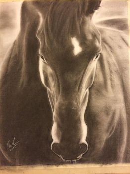 Horse front view charcoal by fangy89