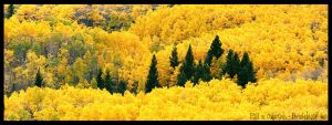 Fall in Colorado by drinkdecaf