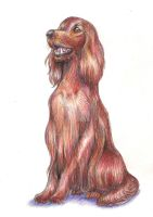 Commission: Irish Setter by TiamatART