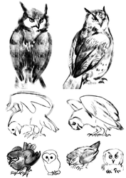 Owls, or The Virtue of Drawing With Reference by ArsFatalis