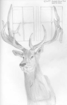 Elk head at a cabin by roothragon