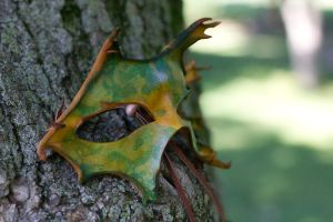 Green and Yellow Leaf Mask by OsborneArts