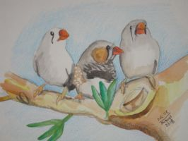 Zebra Finches Snow, Banks and Flurry by Vampiric-Conure