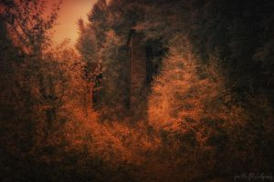 Infrared Dreams by wchild