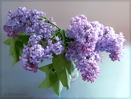 Melody of the Lilac 1 by AnnaZLove