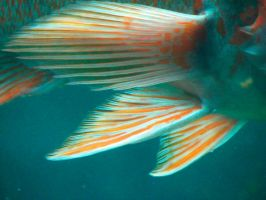 Fish Fins 1 by FoxStox