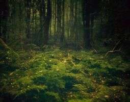 The Trusting Woods by LaMusaTriste