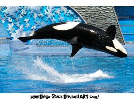 Killer Whale.3 by Della-Stock