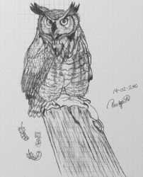 Horned owl by firsthuntress