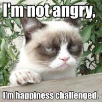 Grumpy Cat Meme 2 by jinxxnixx