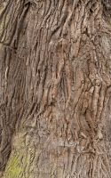 Bark Texture 01 by SimoonMurray
