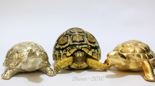 Three Musketeers by dionr