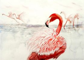 Flamingo by jakhont