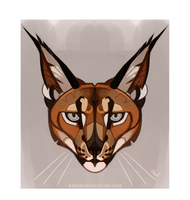 caracal caracal by Kipine