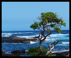 Hawaiin Shoreline by swashbuckler