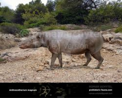 Anthracotherium magnum by Rom-u