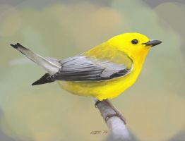 Prothonotary Warbler by SuperGiantBird