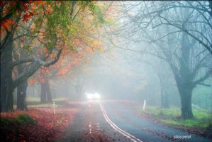 foggy road by Zlata-Petal
