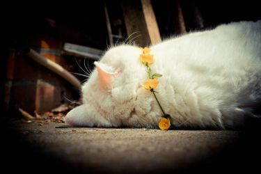 White cat with Flowers 2 by Trickylady