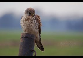 Lonely in the cold by Sophie1990