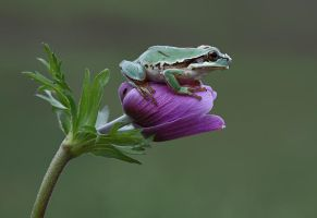 small frog by lisans