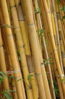 Tilted Bamboo 15394872 by StockProject1