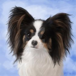 Evie the Papillon by Sharpk