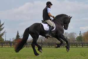 Friesian Ridden 1 by Sooty-Bunnie