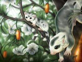 Sugar Gliders by Dyewind