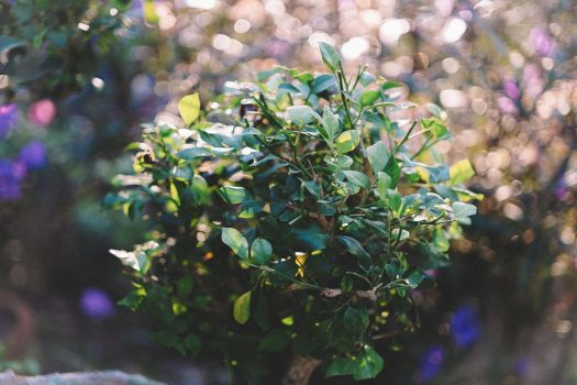 Foliages by Wintfox