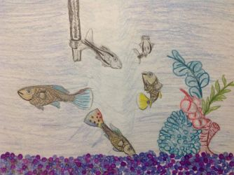 Fancy Guppies and Zebra Fish by RainbowGuppy1