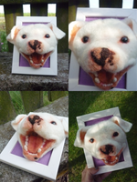Needle Felted Pit Bull by Fumono