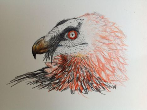 bearded vulture by VikingOwl