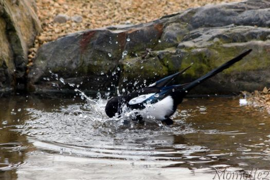 Refreshing bath for mapgie by Momotte2