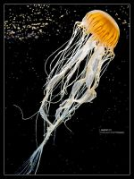 Jellyfish V by bupo