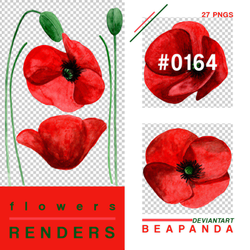 Renders 164 // Poppy Flowers Pngs by BEAPANDA