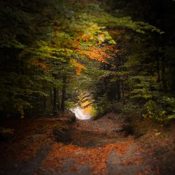 Sleepy forest I by peregrin71
