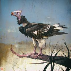 White-Headed vulture luv' by barontieri