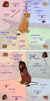 The Lion King: Character Design Similarities by blueiceflower